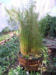 The oak barrel