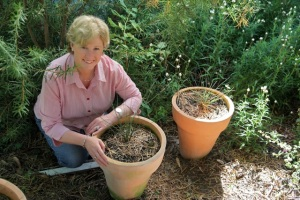Christine and her Xanthorrhoeas