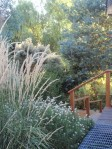 tall grass for seed eating birds