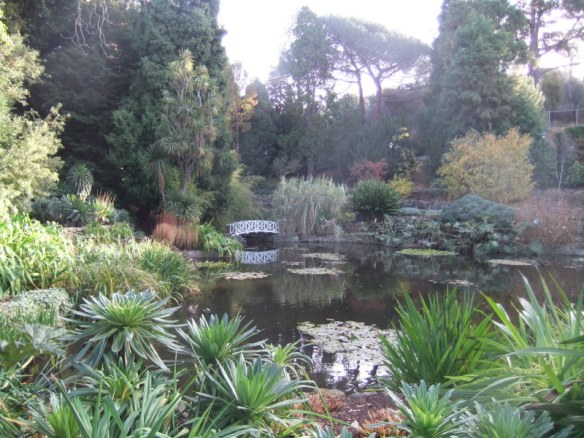 A tranquil spot: the beautiful pond at the Botanical Gardens