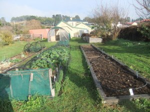Winter veggies in the raised beds