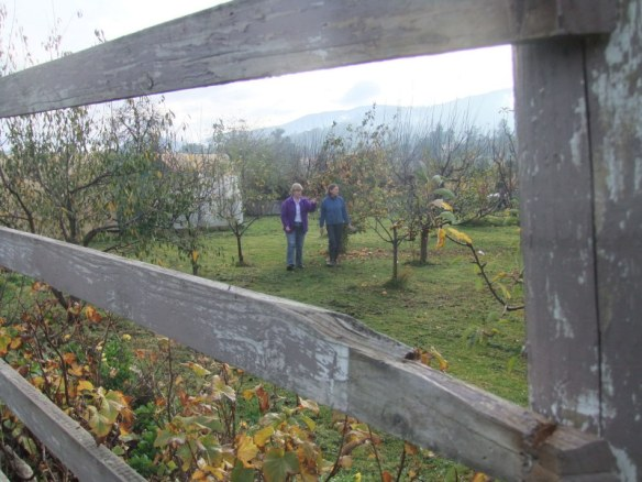Taking a walk through the productive fruit trees