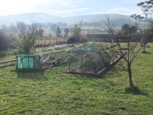 The community garden in beautiful Cygnet