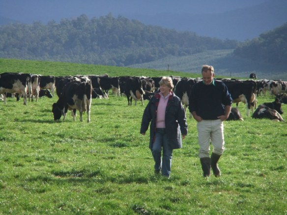 Rolling green pasture and happy cows at Styx River Farm