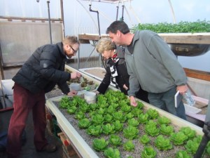 Aquaponics in action