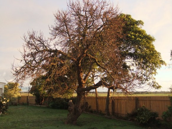 Place of memories: the old mulberry tree