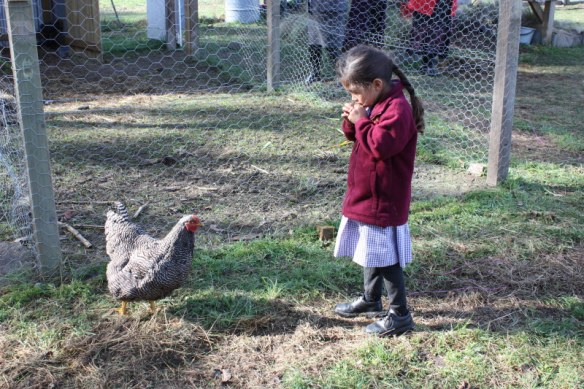 Taleena Watts and a friendly Plymouth Rock hen