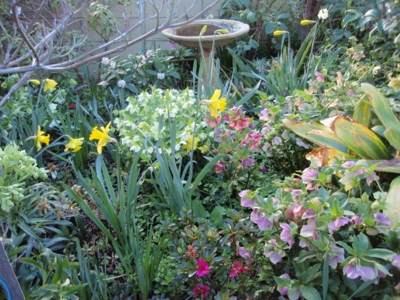 The garden waking up to spring