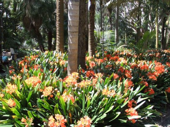 A burst of colour among dappled shade