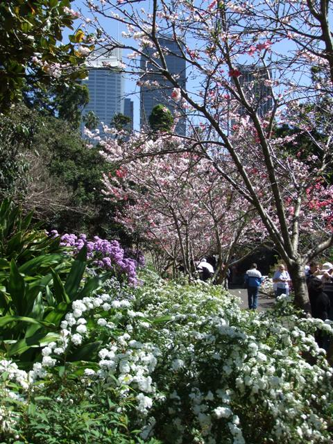Blossoms and blooms soften the city scape