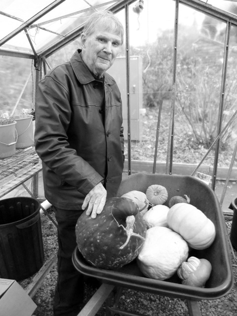 Is this the people's choice? Peter in his element with a barrow full of pumpkins