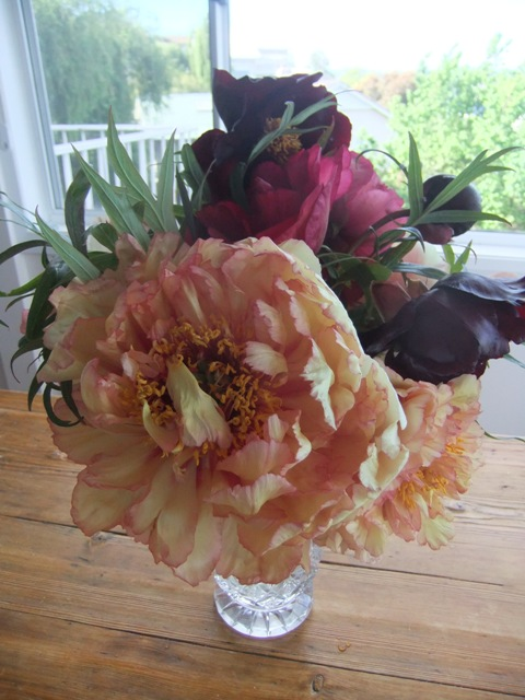 The bold and beautiful peony rose