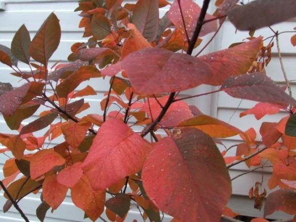 Beautiful autumn colours in the garden