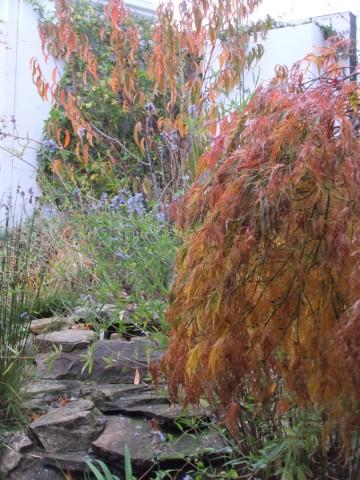 Chascade in autumn