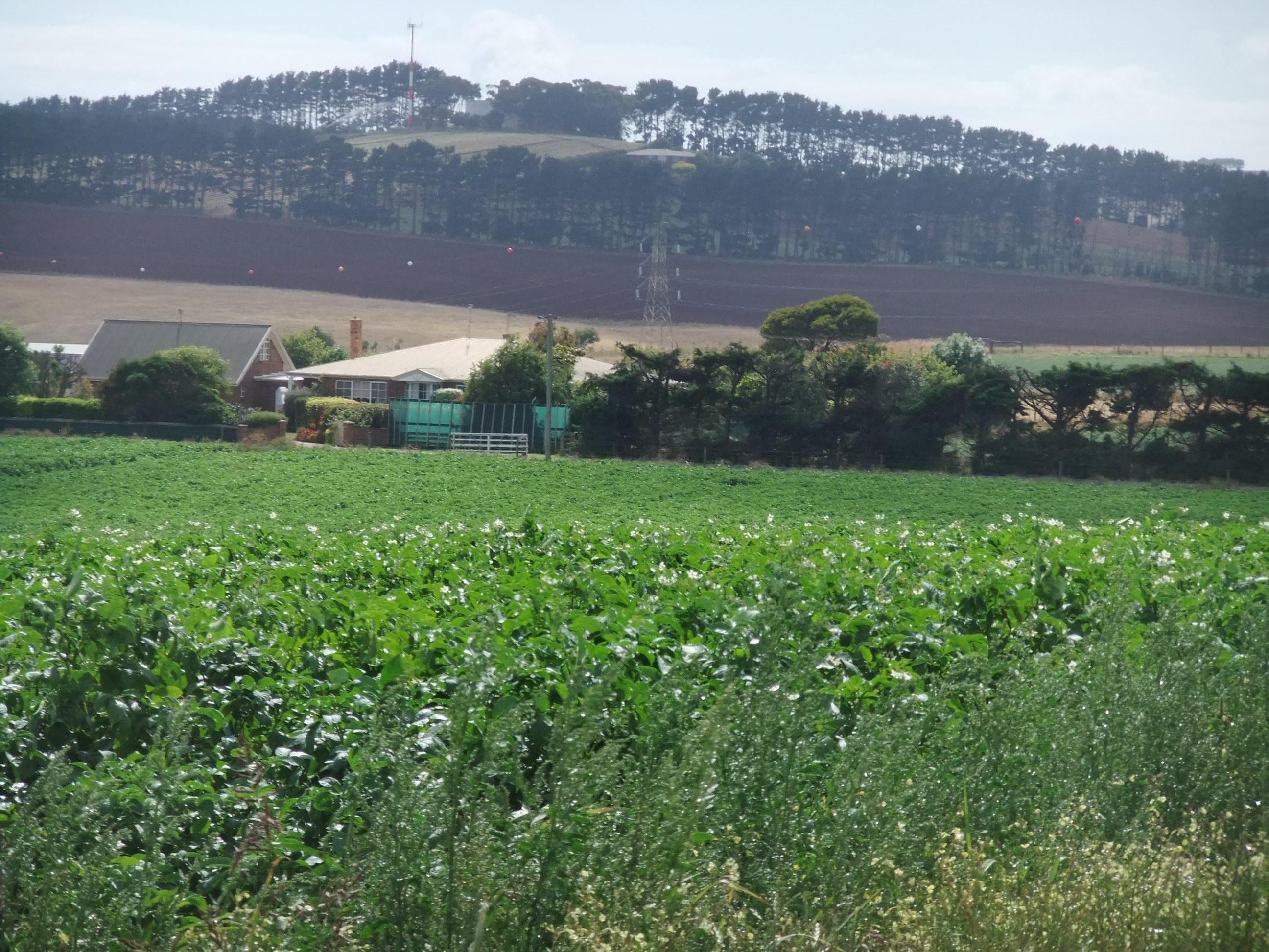 summer garden sanctuary sowing seeds
