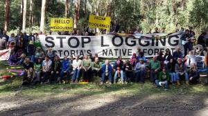 Standing with the many who are campaigning to protect Toolangi.