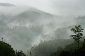 Mt Lindsay, Tarkine. photo. L.O'Brien