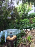 bird bath overlooking peony roses